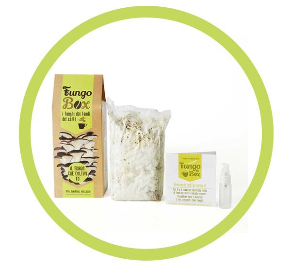 Fungo Box contenuto kit funghi